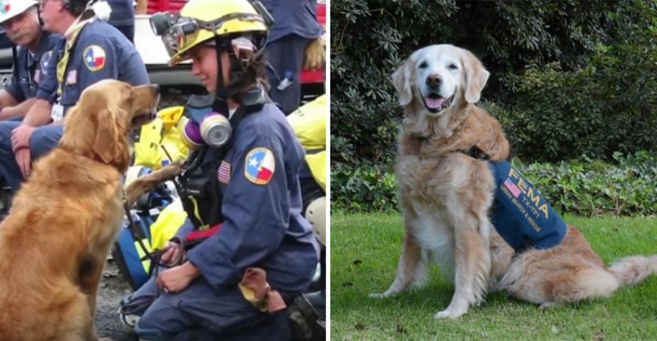 Bretagne 9/11 Rescue Dog Gets Treated to a 16th Bday Party in NYC.