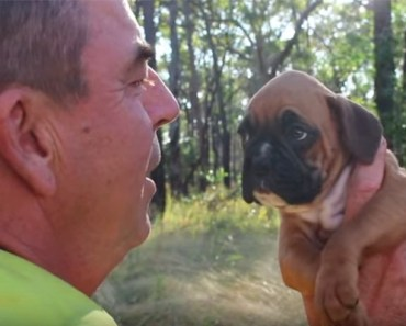 Firefighter's Life Is Changed After Saving Dog in a Wooden Box.