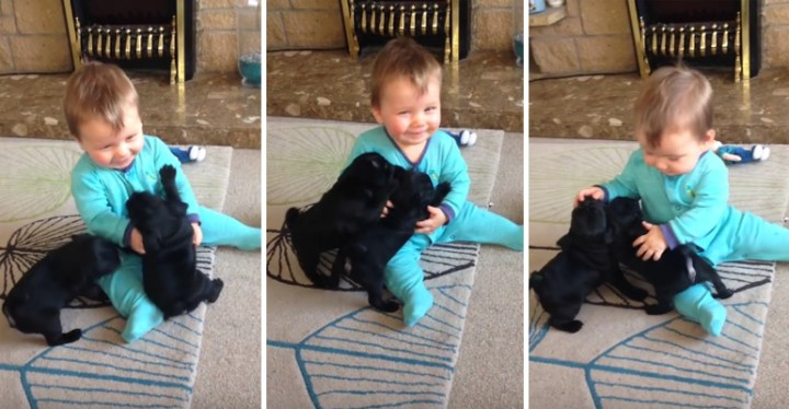 Baby Louis Hugging and Kissing Two Adorable Puppies.