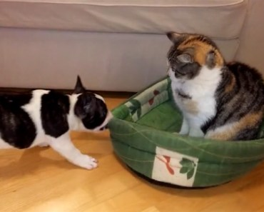 Pixel the Puppy Tries to Get His Doggy Bed Back from the Family Cat.