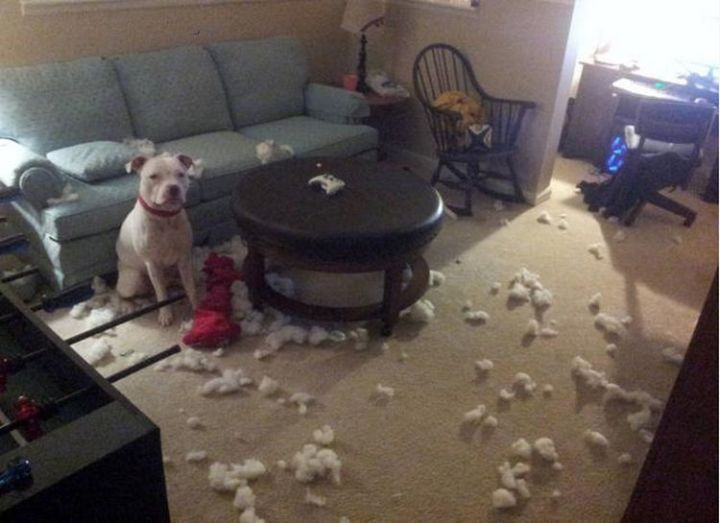 "20 Things Dog Owners Will Understand - ""It wasn't me..."""