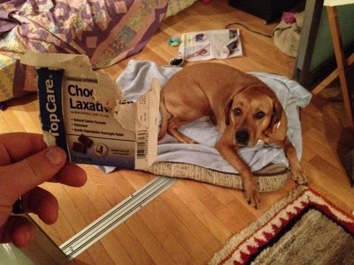28 Perfectly Timed Photos of People Having a Bad Day - I'm not sure if I feel bad for the dog or his owner. Things may get messy.