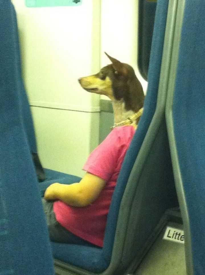 31 Hilariously Misleading Photos - That is not a dog with human arms wearing a t-shirt.