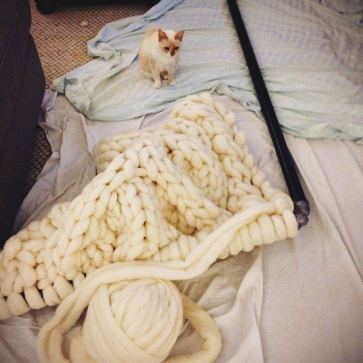 But her other cat Molly also looks like she wants to sleep on the giganto knit blanket too!