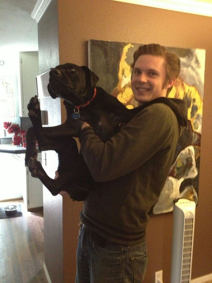 12 Huge Dogs That Still Think They Are Puppies - Not all of them like to be carried though...LOL!