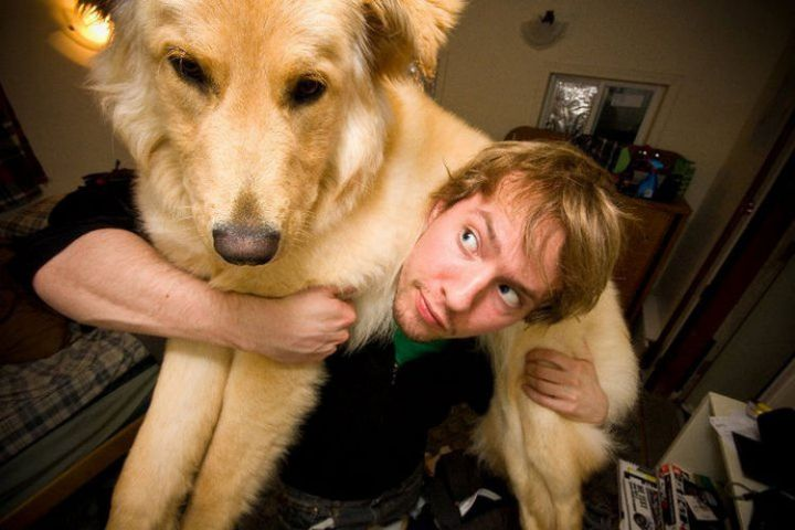 12 Huge Dogs That Still Think They Are Puppies - This dog doubles up as a scarf.