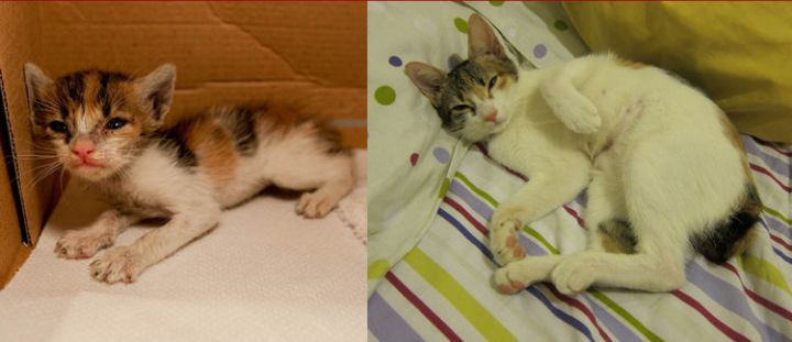 23 Then Now Photos - A cute kitten all grown up. His facial reaction is so cute!