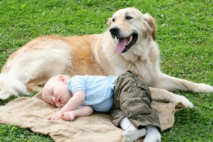 14 Dogs and Babies - Dogs make great babysitters!