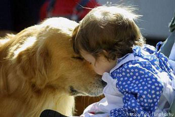 14 Dogs and Babies - These two were meant for each other.