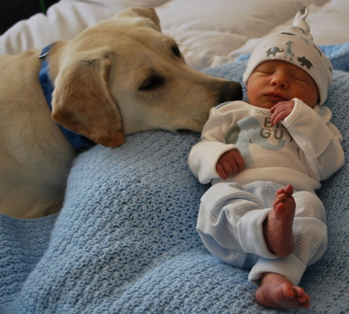 33 Adorable Photos of Dogs and Babies - Forming an immediate bond with a new member of the family.