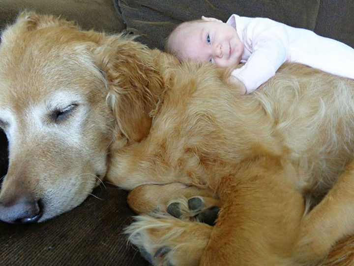33 Adorable Photos of Dogs and Babies - Filled with happiness.
