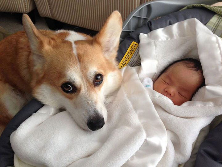 33 Adorable Photos of Dogs and Babies - Meeting her new best friend for the first time.