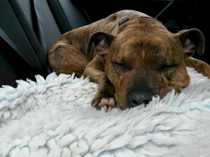 She has been dubbed 'Britain's loneliest dog' and it breaks your heart.
