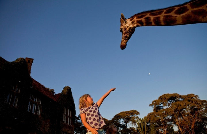 Children will love playing outside with these gentle giants.