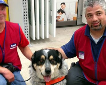 Lowe's Canada Hires a New Employee and His Service Dog.