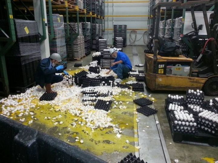 28 People Having a Bad Day - Working in an egg factory is delicate work.