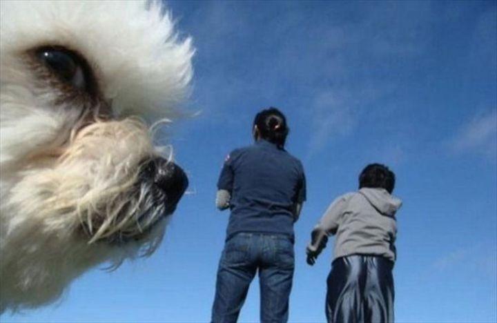 10 animal photobombs - That's a little creepy.