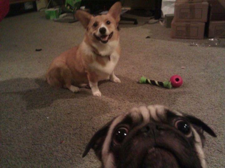 10 animal photobombs - He looks a little worried.
