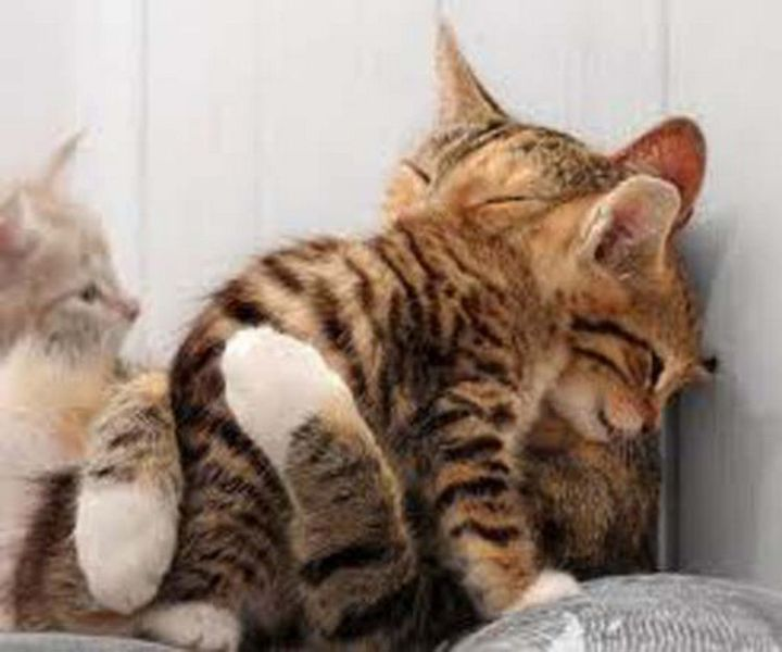 10 Photos of Cats Hugging - A proud mother hugging her daughter.