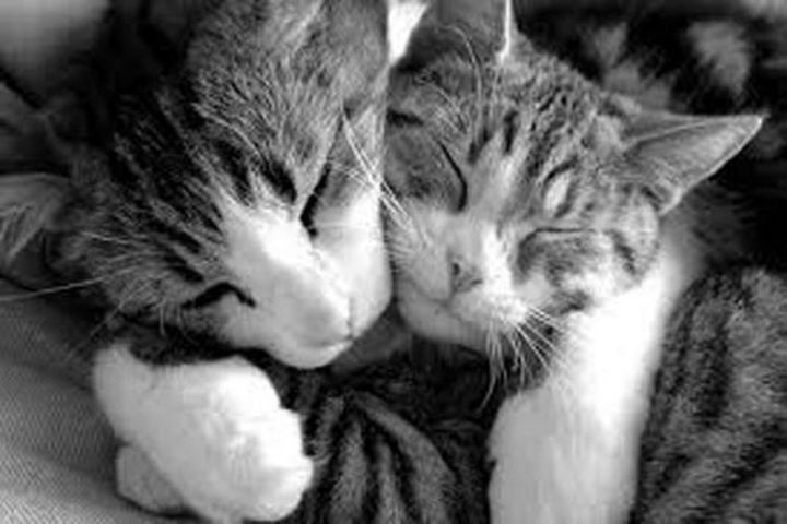 10 Photos of Cats Hugging - Brother and sister cuddling.