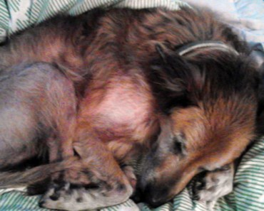 16-Year-Old Abandoned Dog Gets Adopted by a Loving Family.