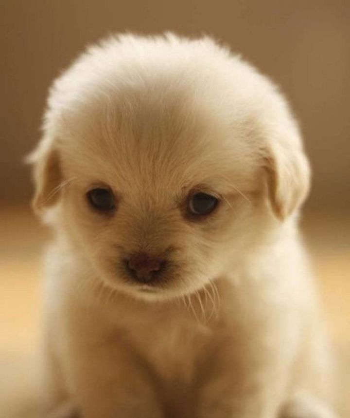 25 Super Cute Fluffballs - That cute face I could hug all day.
