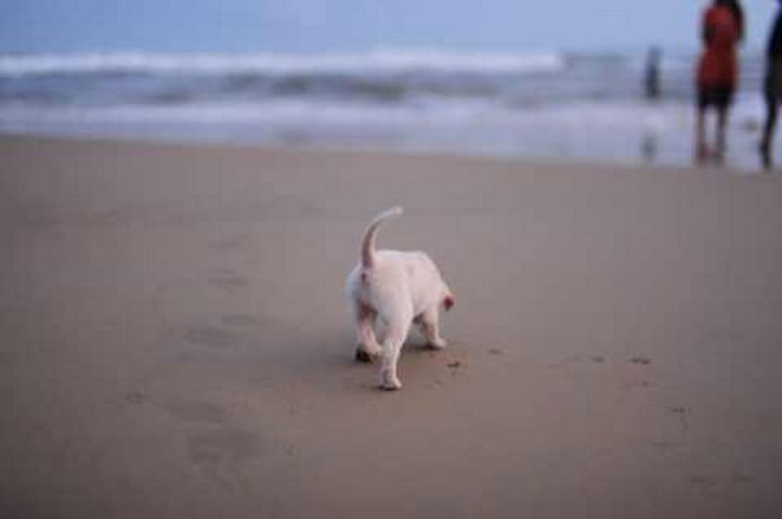 He even swam in the Arabian Sea and enjoyed walking in the sand.