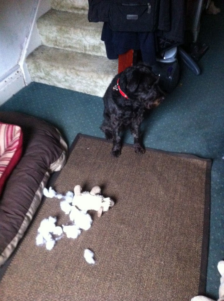 """13 Dogs Feeling Guilty - """"I really love my stuffed toy too."""""""