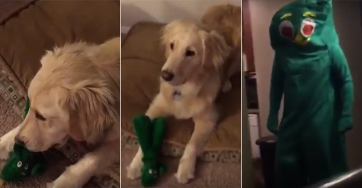 Jolene the Dog's Heartwarming Reaction When She Meets Gumby!