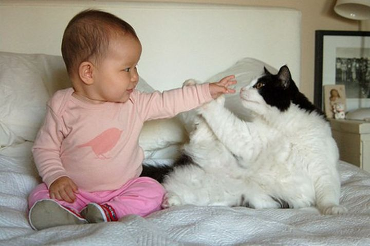 """21 Cats Babysitting Babies - """"Boop! I caught your nose."""""""