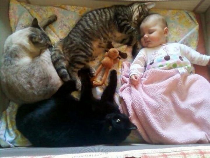 21 Cats Babysitting Babies - Part of the family.