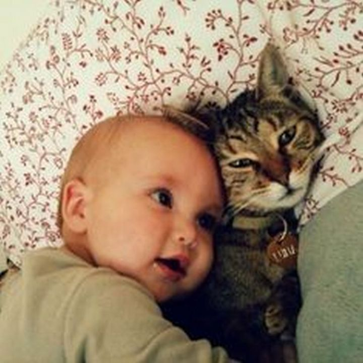 """21 Cats Babysitting Babies - """"I can hear your heart beating!"""""""