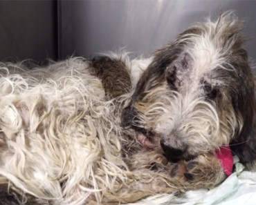 Heartwarming Recovery of a Dog Thrown out of a Speeding Car.