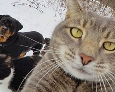 22 Funny Animal Selfies Are the Cutest Thing You'll See All Day.