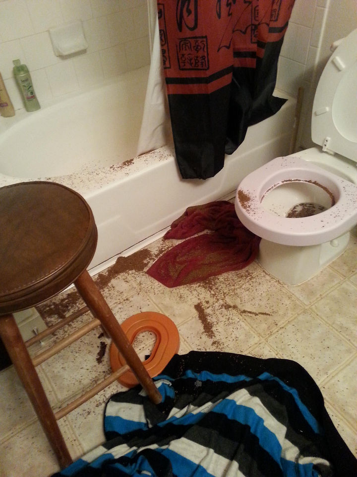 25 People Having a Really Bad Day - When you think it's a good idea to toilet train the cat.