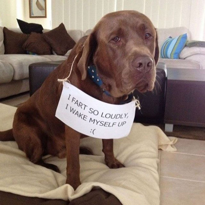 26 Funny Photos - He feels bad about it too.