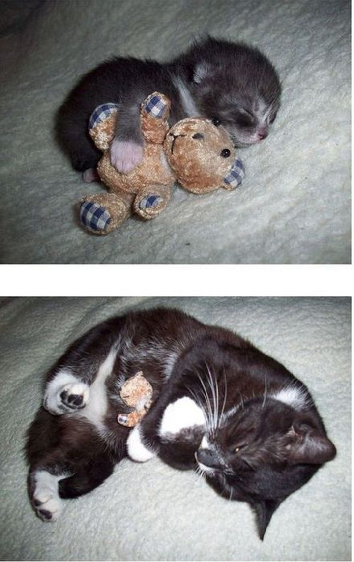 29 Before and After Photos of Family Cats - One word: Awww.