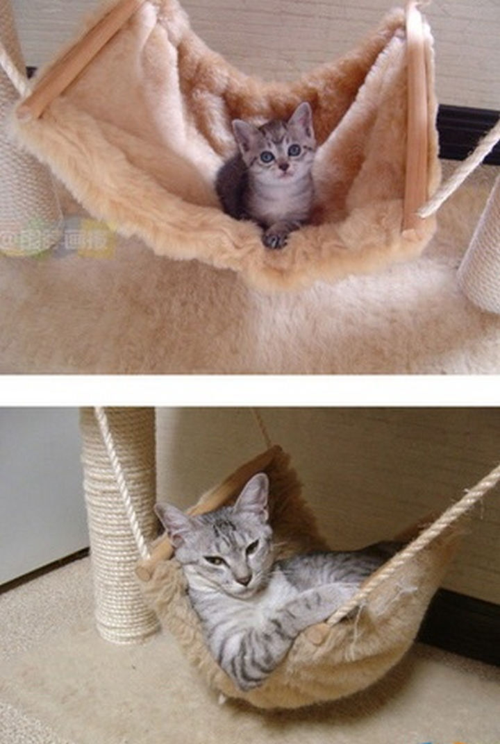 29 Before and After Photos of Family Cats - Still lovin' the hammock!