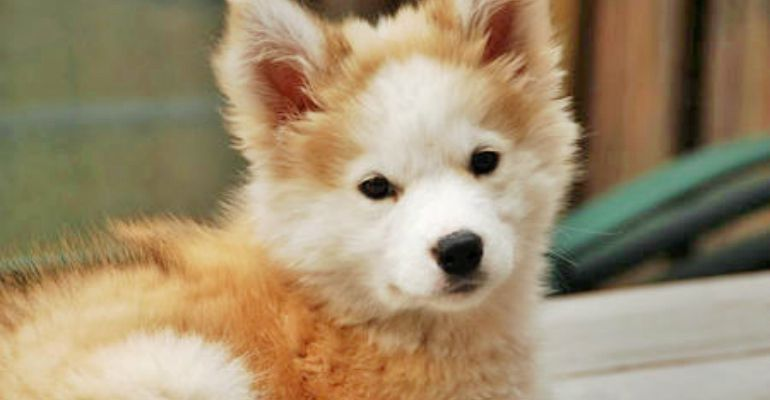 23 Rare Dog Breeds That Would Make Very Special Family Pets