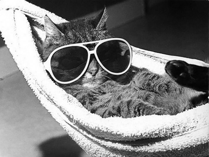 23 Amusingly Lazy Cats - Keep calm and chill on.
