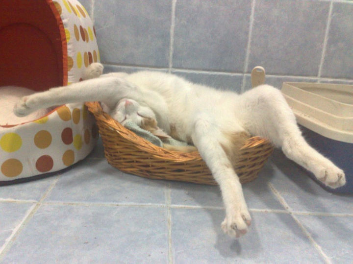 """23 Amusingly Lazy Cats - """"If it fits, I sits...or sleep."""""""
