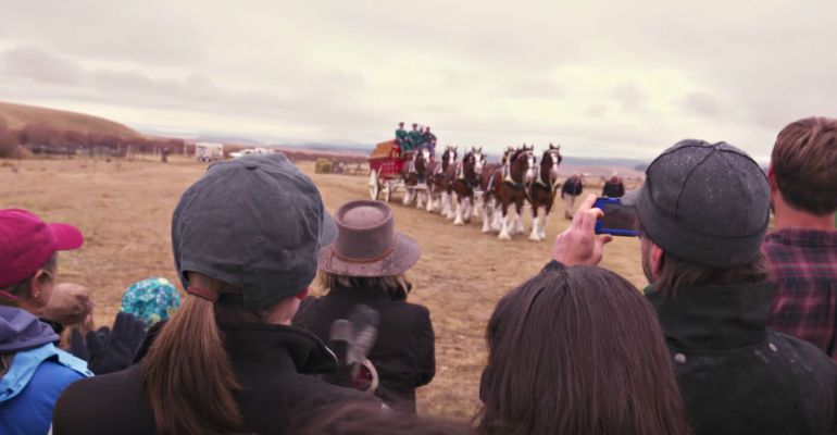 Budweiser Clydesdales Help Purina Deliver Surprise to a Horse Shelter in Need.