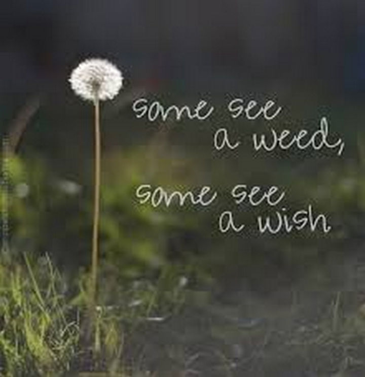 """10 Perspective Quotes - """"Some see a weed, some see a wish."""""""