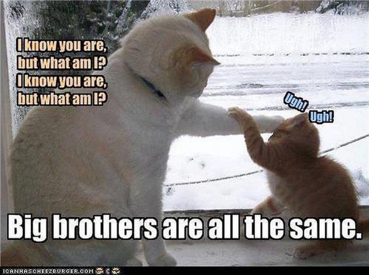 "37 Funny Animal Memes - ""I know you are but what am I? I know you are but what am I? Big brothers are all the same."""