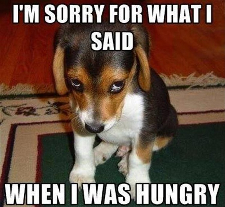 "37 Funny Animal Memes - ""I'm sorry for what I said when I was hungry."""