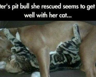 37 Funny Animal Memes That Will Have You Laughing Out Loud.