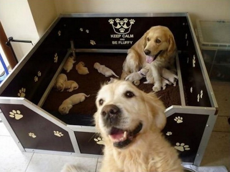 21 Proud Mommy Dogs - Keep calm and be fluffy. Sounds good to me!