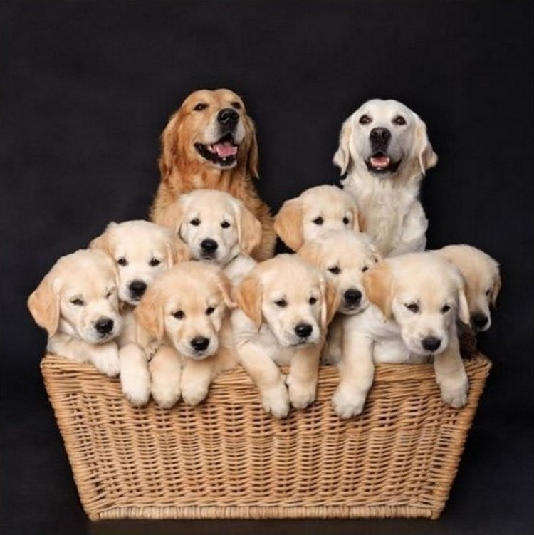 21 Proud Mommy Dogs - Best family picture ever!