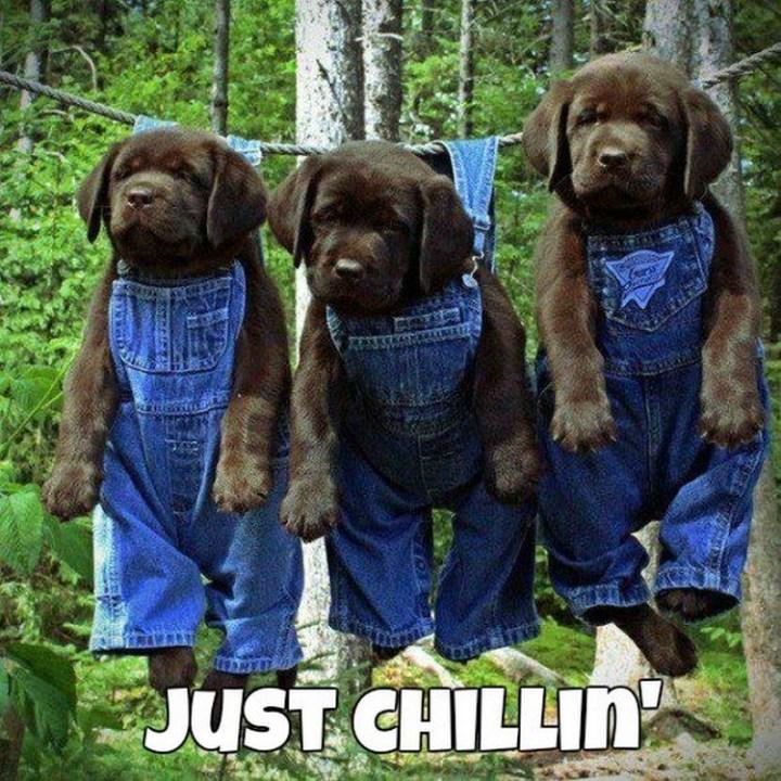 "27 Funny Animal Memes - ""Just chillin'"""