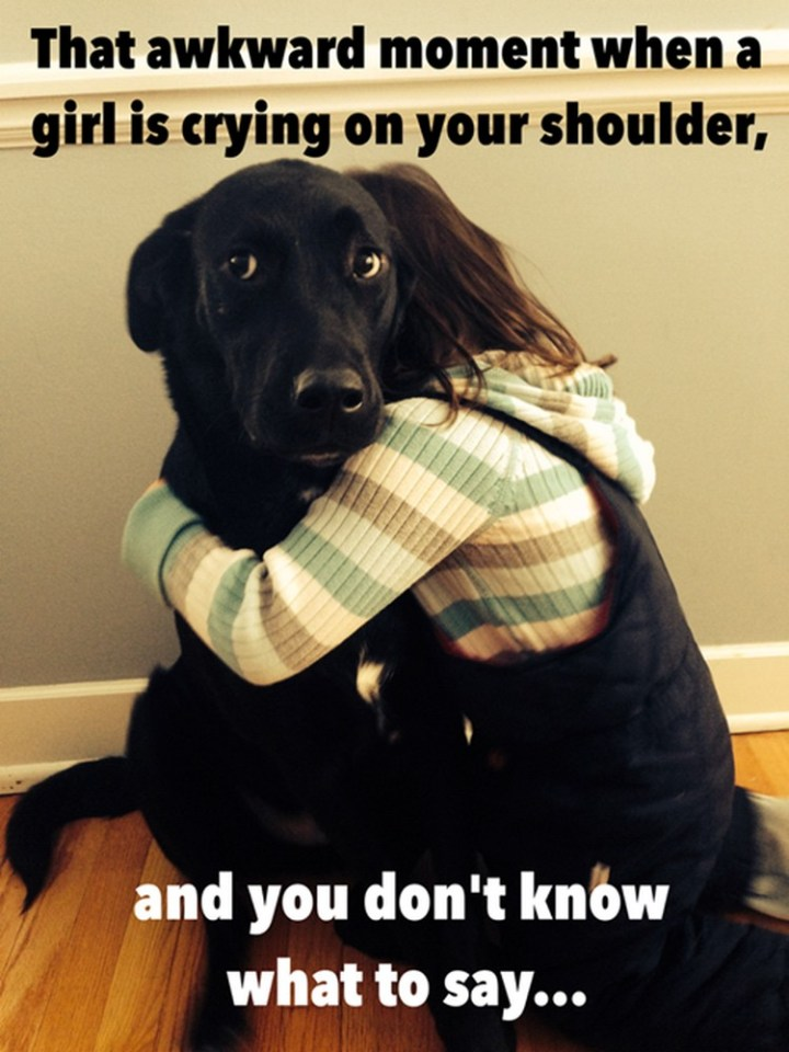 """27 Funny Animal Memes - """"That awkward moment when a girl is crying on your shoulder and you don't know what to say..."""""""